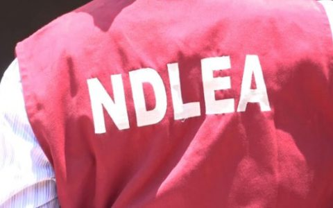 NDLEA Arrests 44