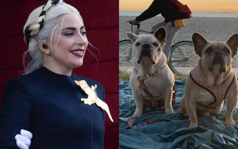 Five Arrested Over Lady Gaga's Dog Case